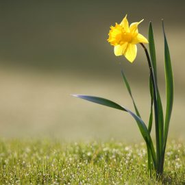 what sets you apart