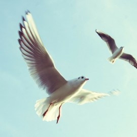 Monday Motivation: Stop Limiting Yourself. The Secret to Unleashing You So that You Can Take Flight and Soar.
